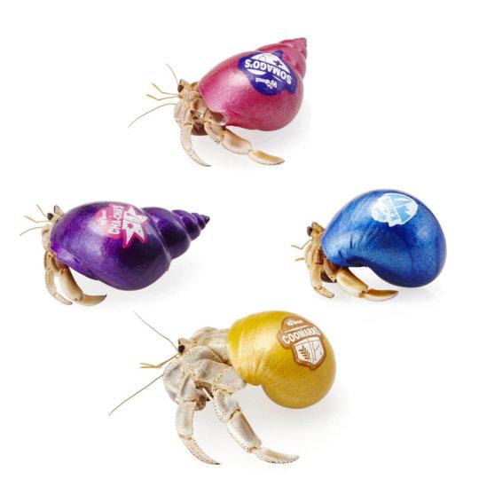 Krabooz - Hermit Crabs Live