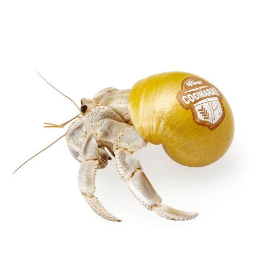 Krabooz - Hermit Crabs Live Coomara