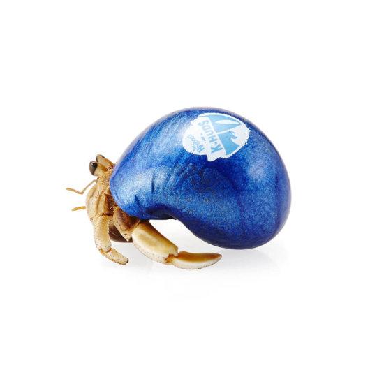 Krabooz - Hermit Crabs Live K-Hud